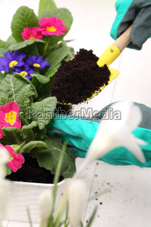 transplanting flowers planting plants floral composition