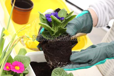 planting pot plants colored primitives