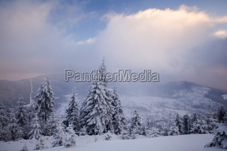 winter landscape with snow covered forest