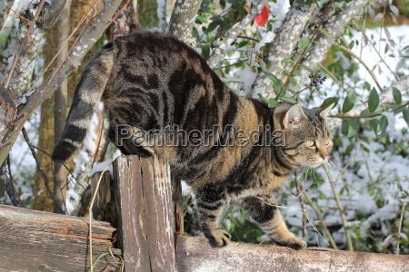 a cat skilfully climbs on a