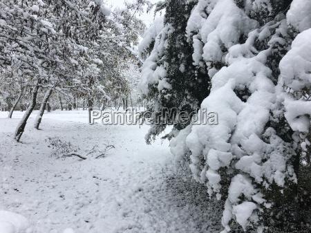 baeume mit einer dicken schneeschicht bedeckt