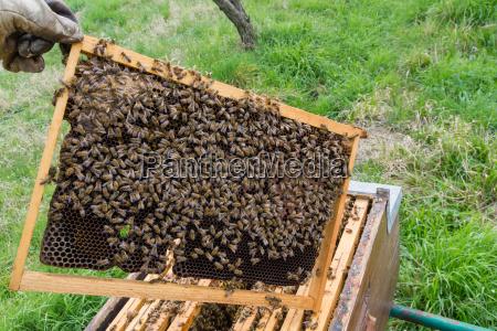 offener bienenstock imkerei