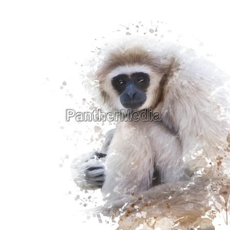 aquarell portrait von weisshand gibbon