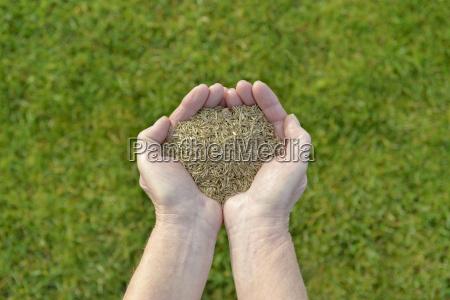 samen rasen gras rasensamen saeen grassamen