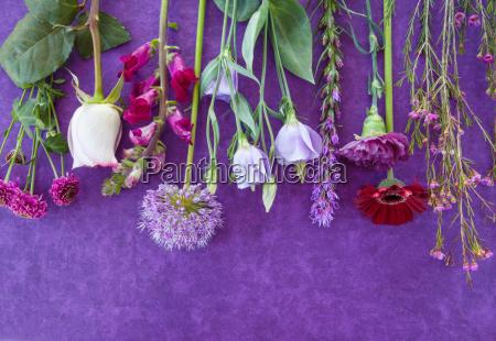 verschiedene frisch schnittblumen