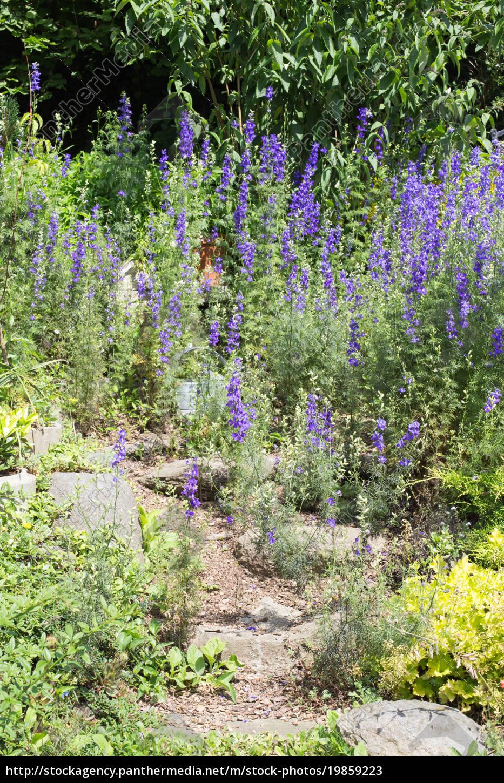 Steingarten mit verschiedenen Pflanzen und Blumen im - Stockfoto ...