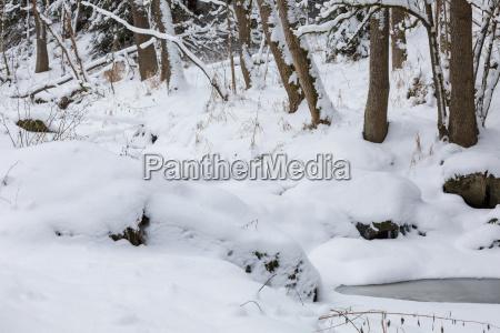 baum winter holz verschneit frost gefroren