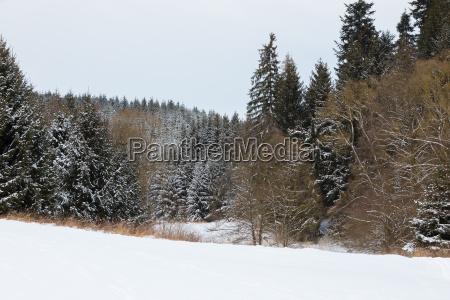 heitere winterlandschaft mit schneebedeckten nach grossem