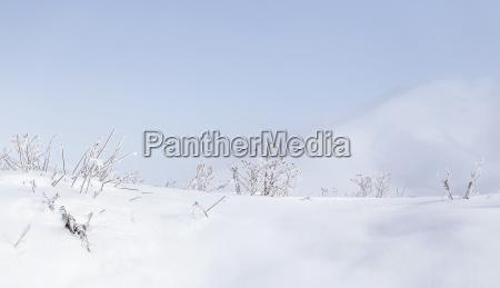 herbs under the snow winter season