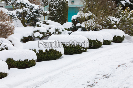 schoener wintergarten mit schnee bedeckt