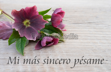 spanish mourning card with purple hellebores
