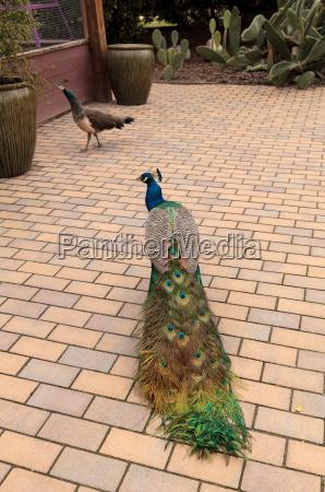 blau weiblich garten vogel gruen gruenes