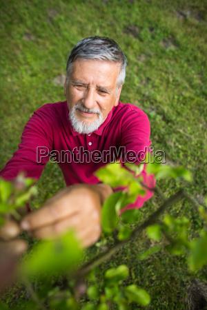 portrait of a senior man gardening