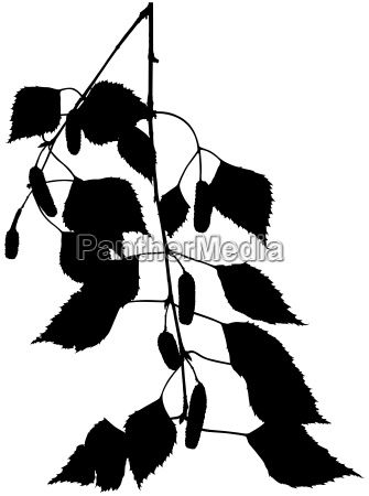 birch branch silhouette