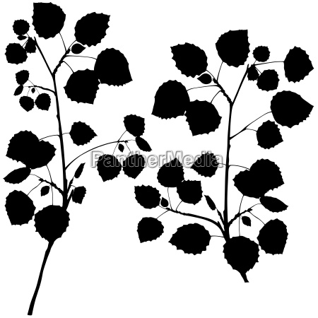 birch branches silhouette