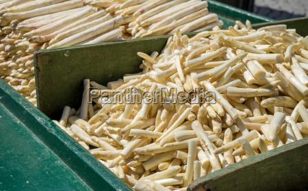 fresh raw white asparagus