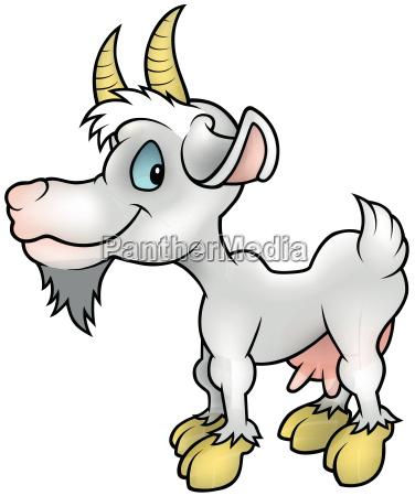 white goat standing