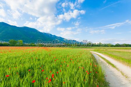 schotterweg durch italienische landschaft