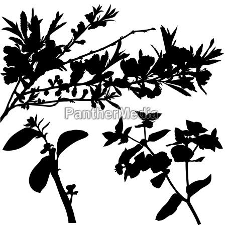 shrub branch silhouettes