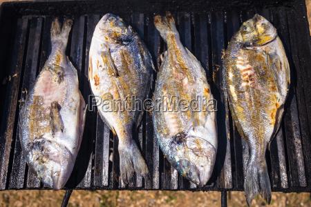 brachsenseefisch auf grill