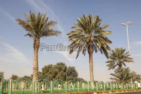 palm trees in mezairaa uae