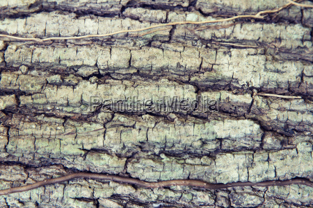 tree trunk bark texture