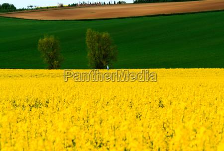 hessische landschaft mit fruehlingsfeldern bei hanau