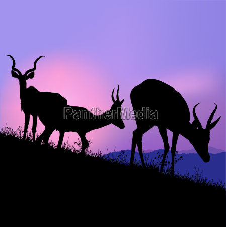 silhouetted grazing antelopes