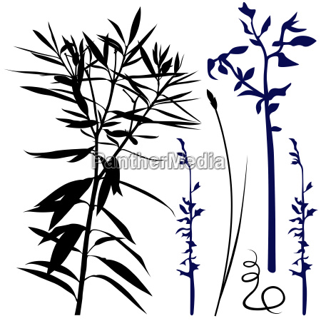 long plant silhouettes