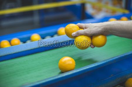 arbeiter auf orangen bauernhof kommissionierung orangen