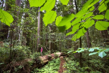 young man hiking along a fallen