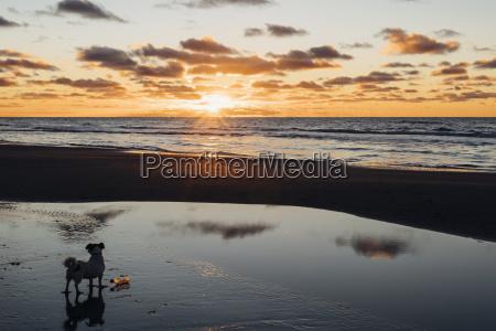 daenemark nordjuetland hund am ruhigen strand