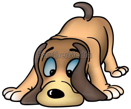 schnueffelnder hund