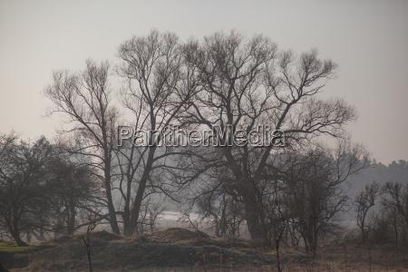 landschaft im winter