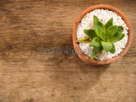 succulent or cactus in pot wooden