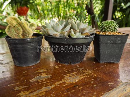 succulent or cactus in pot on