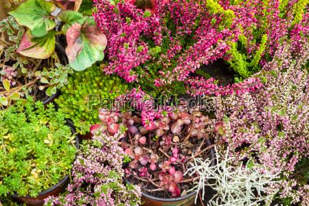 blume pflanze gewaechs indoor hintergrund kraeuter