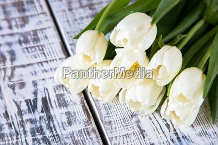 fresh white tulips on light background