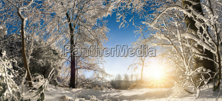 enchanted winter landscape with sun snow