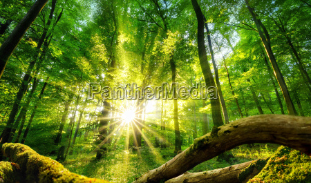 the sun enchants the green forest