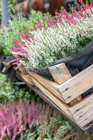 autumnal potted plants in a crate