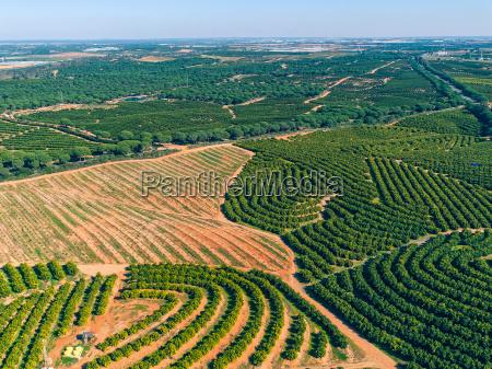 luftaufnahme orangenbaeume plantage