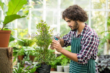 male gardener pruning potted plants