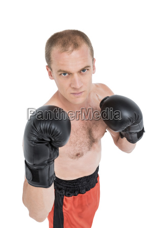 portrait of boxer performing boxing stance