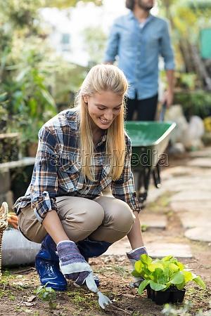 gardener planting while man working in
