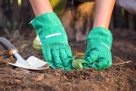 nahaufnahme von gaertnerpflanzen die im schmutz