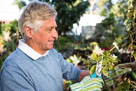 happy gardener pruning twigs of plants
