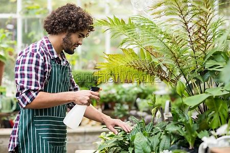 male gardener spraying water on plants