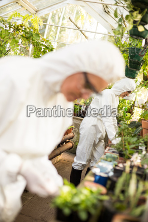 scientists examining plants at greenhouse