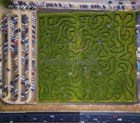 corn maze petaluma pumpkin patch an